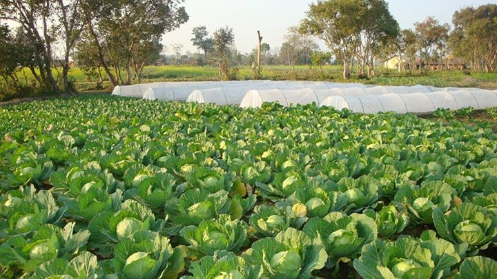 Opportunity to invest your Career in Agriculture in